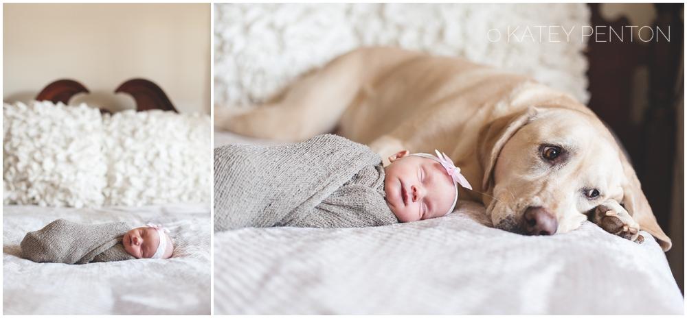 Photographer 0406 dog and newborn baby lifestyle session newborn portraits with yellow lab dog